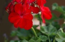Flower 2 by Cathy Grabiec