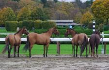 Horse Show by Ashely Dudek