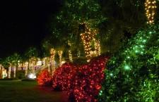 Christmas Lights by Peter Volk