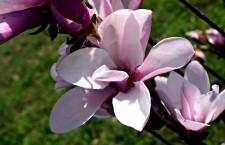 Flower by Diana Birdwell