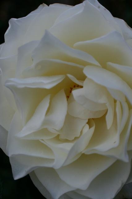 Flower 1 by Kenneth Ferguson